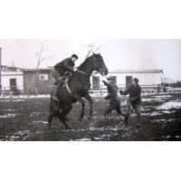 Zajeżdżanie młodych koni, 1965 r.
