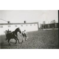 Wojciech Kowerski łapie konia. W tle mała drewniana stajnia, Sopot 1975 r.